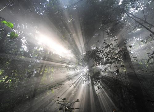 """Kaader Luc Jacqueti filmist """"Oli kord üks mets""""."""