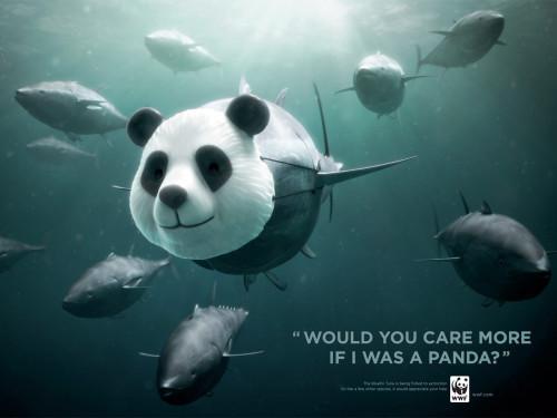 """Maailma Looduse Fondi kampaania """"Kas Sa hooliksid rohkem kui ma oleksin panda?"""" tuunikala kaitseks. Teostus: Ogilvy (Prantsusmaa)"""