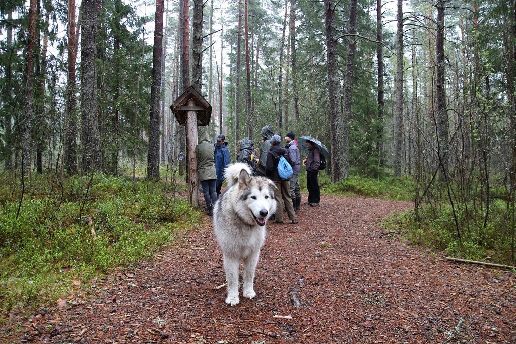 Esiplaanil jutu üks peategelane koer-giid Astor, taamal ülejäänud reisiseltskond. Kõik fotod: Berit Petolai