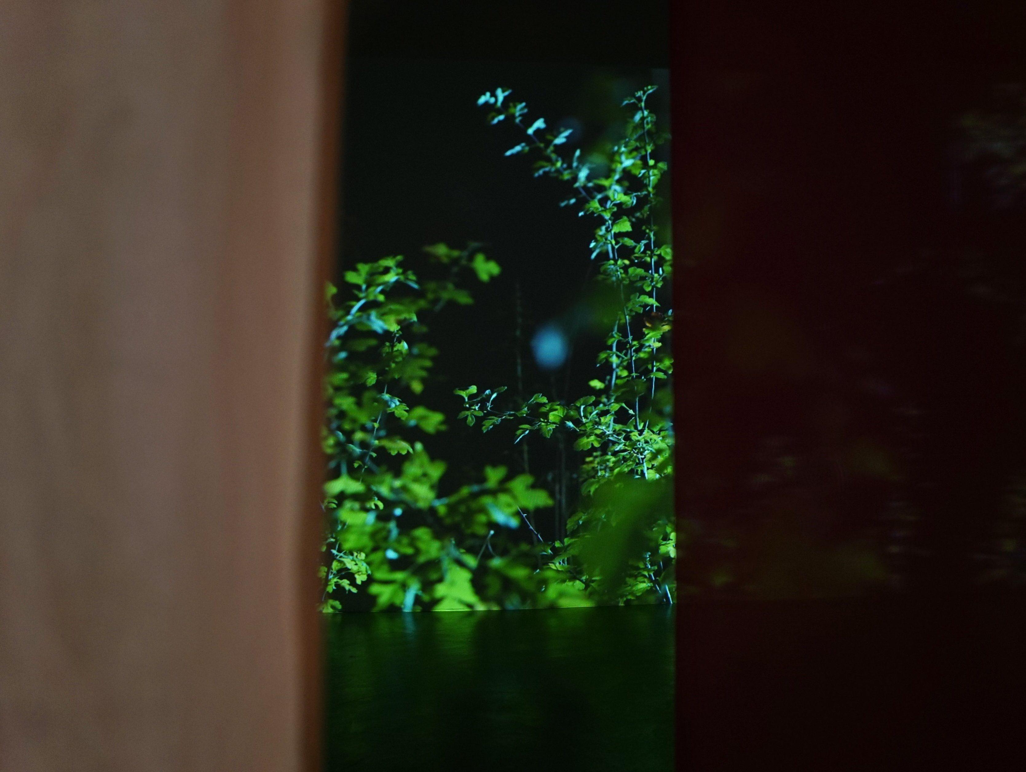 """Mari-Leen Kiipli """"Kala, kes neelab maailma. Osakesed, mis tantsivad päikesekiirtes"""" (2018), video kahes peatükis. Foto: Diana Tamane"""