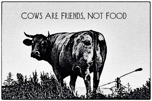 Nõiajaht_veganlusele_Foto_DanielStark(CC BY 2.0)