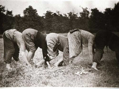 """""""Põllusitikas"""" või """"Rukki sitik"""" oli rituaalne mäng, mida olevat mängitud pärast viljalõikust, hiljem sai vanast viljakusrituaalist pulmanali. Kihelkonna, 1959. Eesti Rahvaluule Arhiiv, foto 16551"""