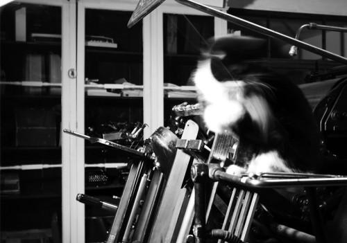 Üheltki Diskolt ei puudu ka muuseumi hing kass Johannes. Foto: Alice Tammela