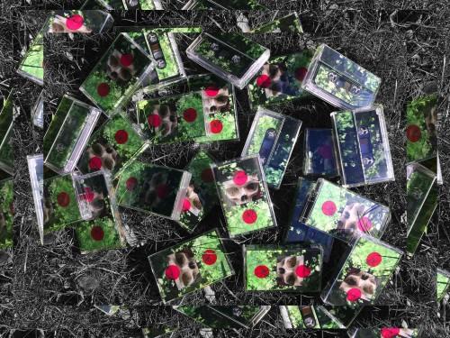 """""""Tagasi Tulevikku"""" kassetid. Foto: Eerik Kändler"""