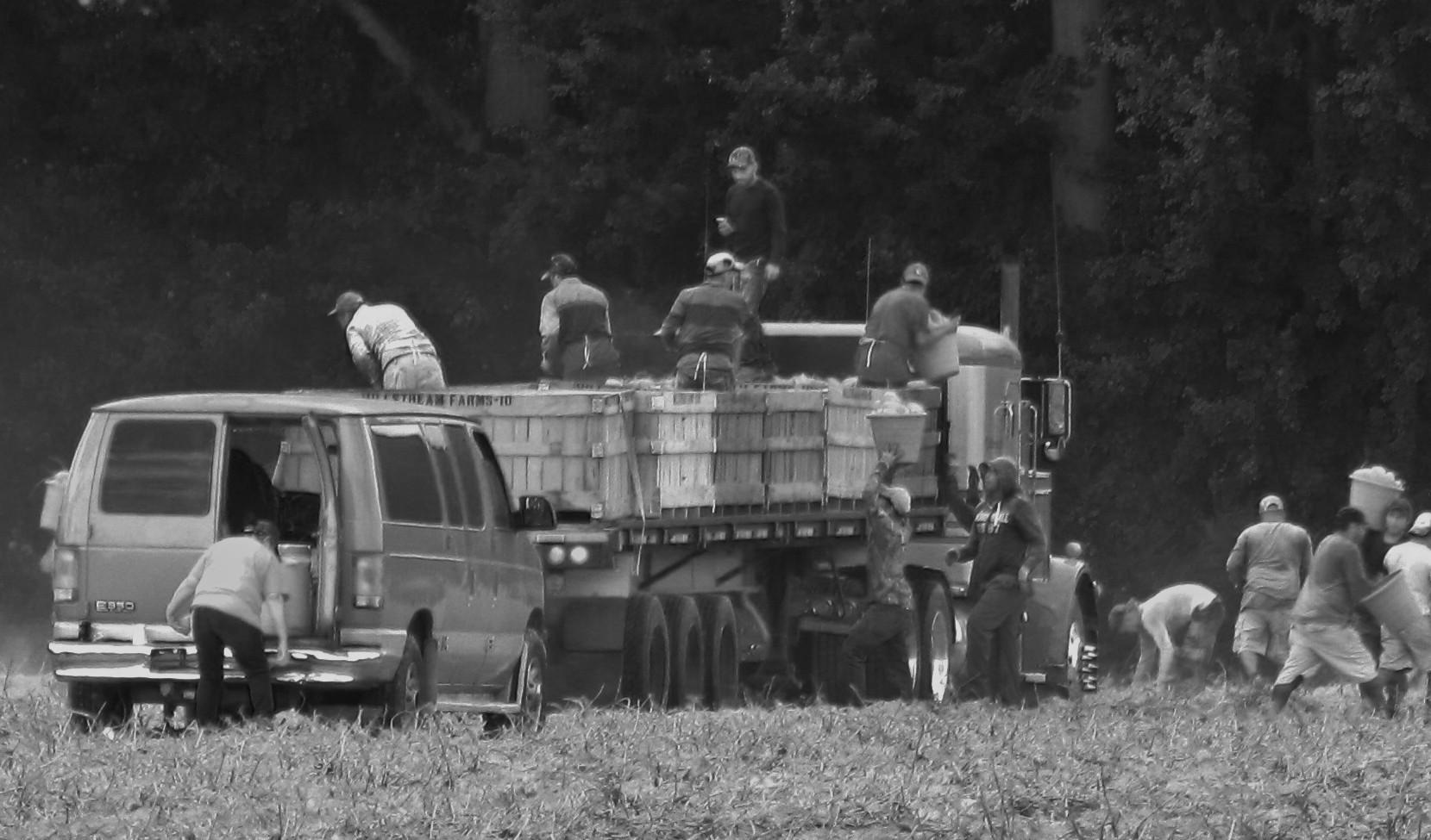 Immigrantidest farmitöölised USAs. Foto: Flickri kasutaja Gerry Dincher (CC BY-SA 2.0)