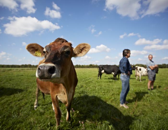Orgaanilise Taani plaan hõlmab ka põllumajanduslike loomade kasvatamist. Foto: press