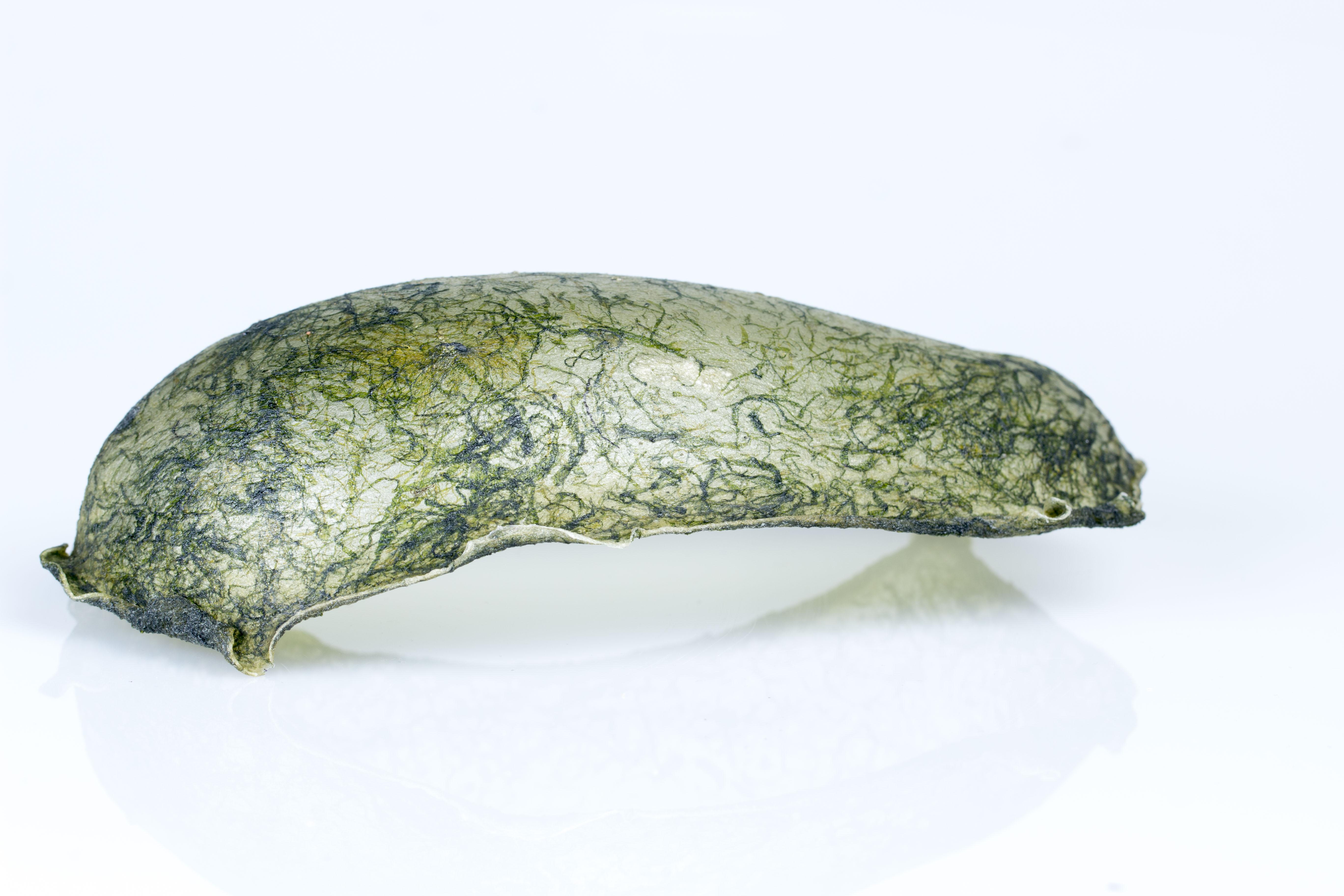 Biopõhine plastik vetikatest. Foto: Gerda Nurk