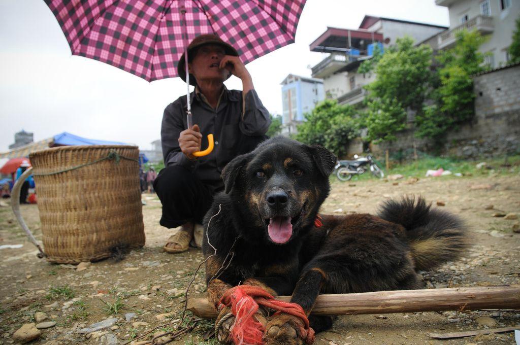 "Lihaks müüdav koer Vietnamis. Foto: Jo-Anne McArthur (""We Animals"")"