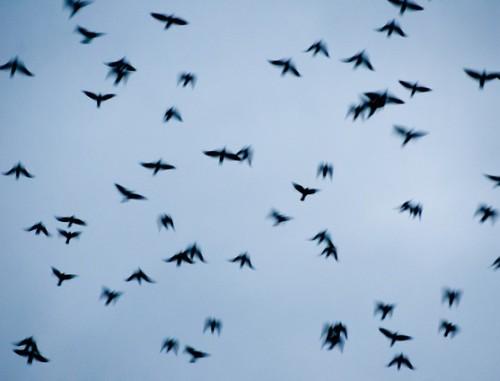tagasi_linnud_jyri kolk
