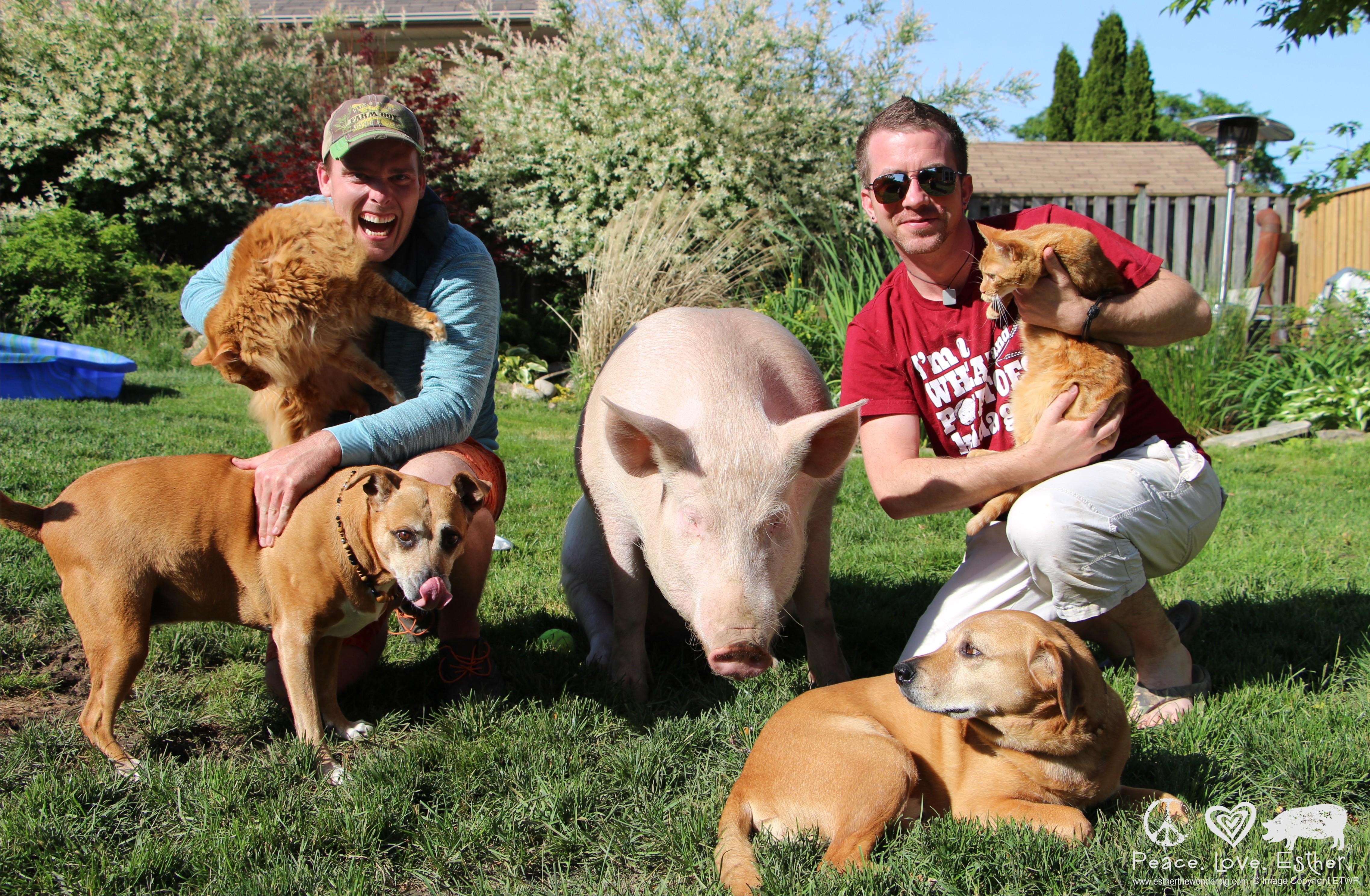 Steve, Derek, Esther ja teised loomad. Foto: Indiegogo