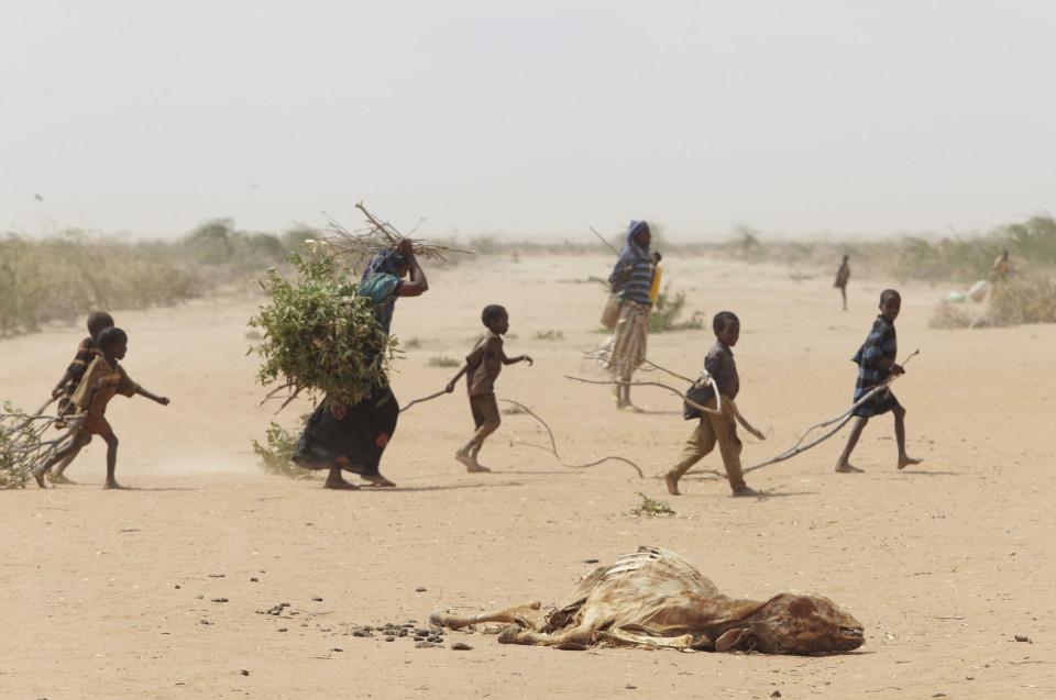 Ülerahvastatud Dadaabi põgenikelaagri ümbruses Keenias otsib põgenikepere oksi ja risu kütteks ja peavarju ehitamiseks. Foto: Andy Hall / Wikimedia Commonsi kasutaja Oxfam East Africa (CC BY 2.0)